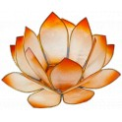 Lotus Levée du Soleil - Mandarine