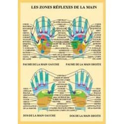 Zones réflexes de la main